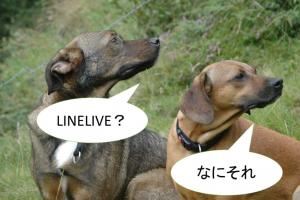 ハートがもらえるLINELIVE(ラインライブ)とは何か?ビジネスでも使える?