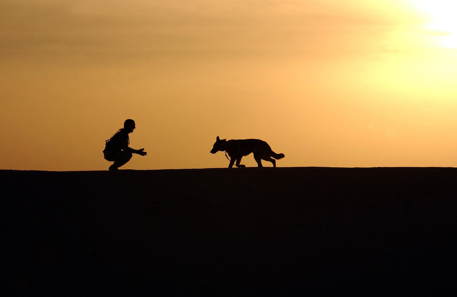 夕暮れ 犬と人