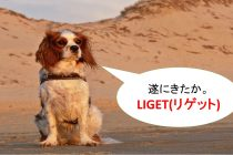 公式LINEのASPツール「LIGET(リゲット)」とは何か?料金(費用)は?【公式LINE(旧:ラインアット)でアフィリエイトが可能なツール】