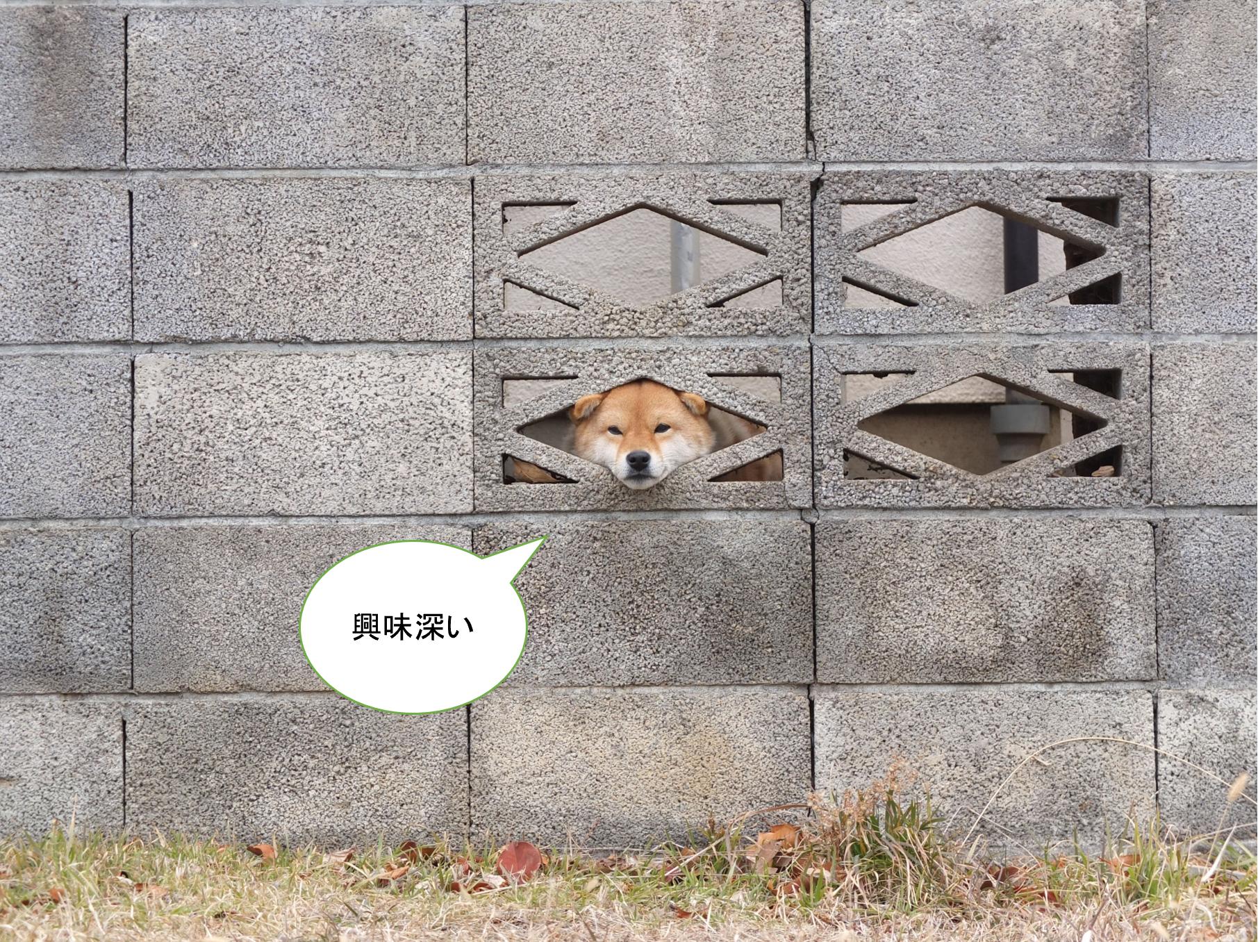 興味深い犬